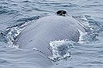 Fin whale alongside!