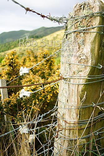 Old Farm Fence Post Strainer Post New Zealand Nz