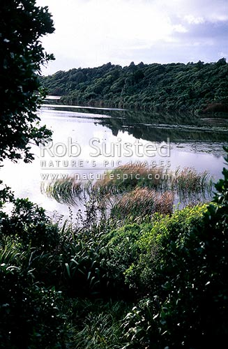 Lake Papaitonga Reserve, Levin, Horowhenua District, Manawatu-Wanganui Region, New Zealand (NZ) stock photo.