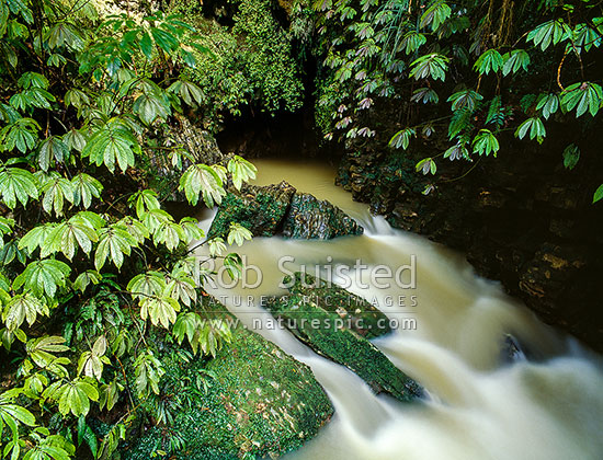 River in limestone country at Ruakuri Scenic Reserve. Foliage is Parataniwha (Elatostema rugosum), Waitomo, Waitomo District, Waikato Region, New Zealand (NZ) stock photo.
