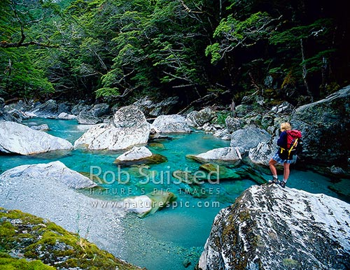 Tramper on the Routeburn Track, next to the clear blue Routeburn River, Mount Aspiring National Park, Queenstown Lakes District, Otago Region, New Zealand (NZ) stock photo.