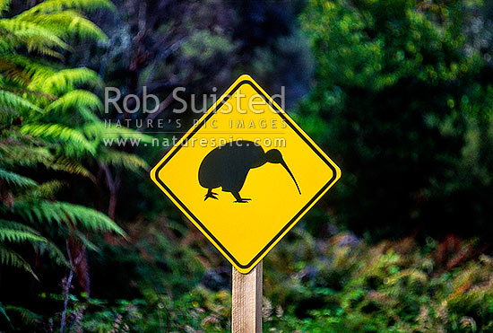 Sign warning motorists to watch for Kiwis crossing the road at night. Okarito, Westland National Park, New Zealand (NZ) stock photo.