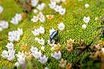 Alpine plant & insect