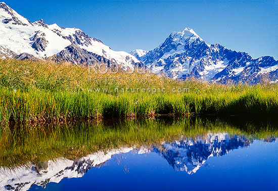 Summit of Mount Cook / Aoraki (3754m) reflected in Sealy Tarns; Sealy Range, Aoraki / Mount Cook National Park, MacKenzie District, Canterbury Region, New Zealand (NZ) stock photo.