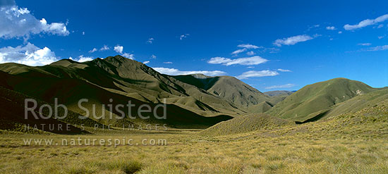 Lindis Pass tussock hill country, Central Otago, Central Otago District, Otago Region, New Zealand (NZ) stock photo.