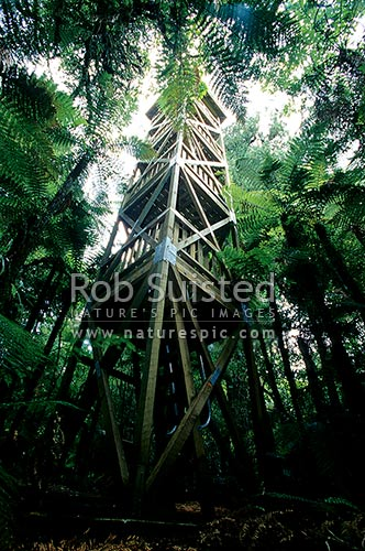 Forest observation tower in Podocarp forest for visitors to view birds and tree canopy etc, Pureora Forest Park, Waitomo District, Waikato Region, New Zealand (NZ) stock photo.