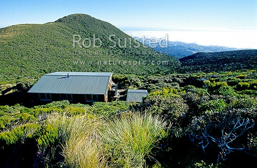 Pouakai Hut high on the Pouakai Range, surrounded by native forest/bush, Taranaki National Park, Egmont National Park, Taranaki, New Plymouth District, Taranaki Region, New Zealand (NZ) stock photo.