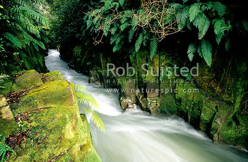 Whirinaki River in the Te Whaiti Nui A Toi Canyon, Whirinaki Forest Park, Whakatane District, Bay of Plenty Region, New Zealand (NZ) stock photo.