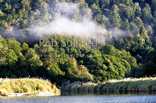 Quiet mist filled bay on Lake Waikaremoana, Te Urewera National Park, Wairoa District, Hawke's Bay Region, New Zealand (NZ) stock photo.