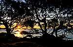 Beach sunset, pohutukawa trees