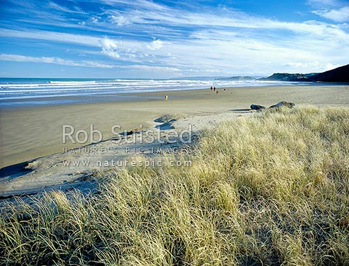 People walking dogs on Makorori Beach, north of Gisborne, Gisborne, Gisborne District, Gisborne Region, New Zealand (NZ) stock photo.