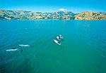 Hector's dolphins, Akaroa Harbour