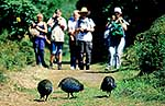Takahe birds and walkers
