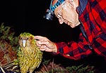 Kakapo being inspected