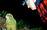 Kakapo bird and Don Merton