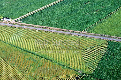 Farmland in the Wairau Valley near Blenheim. Aerial View, Marlborough, Marlborough District, Marlborough Region, New Zealand (NZ) stock photo.