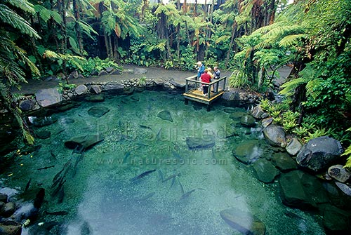 Trout Pool At Rainbow Springs Being Observed By Tourists