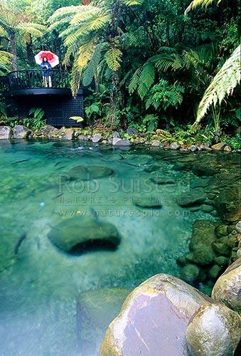 Trout Pool At Rainbow Springs Rotorua Rotorua Rotorua