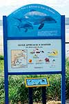 Sign: Dolphin swimming guidelines