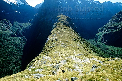 Looking down on Mackinnon Pass. Arthur Valley (L) and Clinton (R). Milford Track - the 'finest walk in the world', Fiordland National Park, Southland District, Southland Region, New Zealand (NZ) stock photo.
