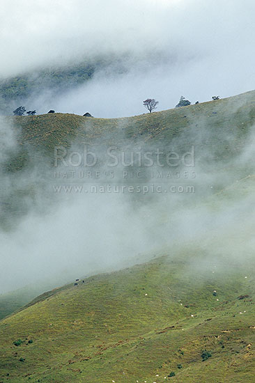 Misty Farmland In The Rai Valley Marlborough Marlborough District Marlborough Region New Zealand Nz Stock Photo From New Zealand Nz Photos And Stock Photography By Rob Suisted