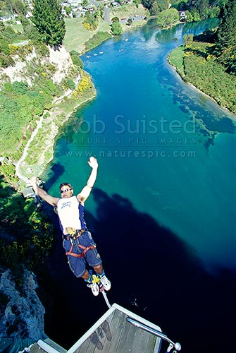 Bungy Jumper high (47metres) above the Waikato River. Taupo Bungy, Taupo, Taupo District, Waikato Region, New Zealand (NZ) stock photo.