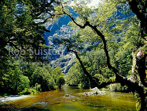 The upper Clinton River on the Milford Track - the 'finest walk in the world', Fiordland National Park, Southland District, Southland Region, New Zealand (NZ) stock photo.