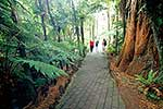 Rainbow Springs forest walk