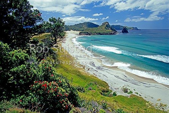 Awana Bay And Beach With Pohutukawa In Flower Great