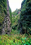 Great Barrier Island, Mt Hobson track