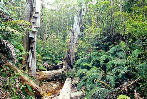 Historic Kauri timber dam hidden in the upper Kaiarara Valley. Unusual horizontal design, Great Barrier Island, Auckland City District, Auckland Region, New Zealand (NZ) stock photo.