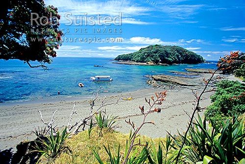 Goat Island and Goat Island Marine Reserve, Leigh, Rodney District, Auckland Region, New Zealand (NZ) stock photo.