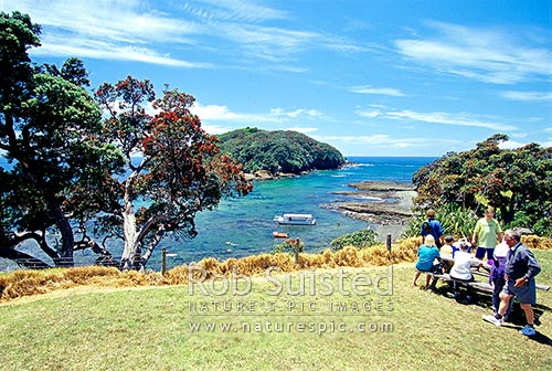 Goat Island and Goat Island Marine Reserve with flowering pohutukawa tree, Leigh, Rodney District, Auckland Region, New Zealand (NZ) stock photo.
