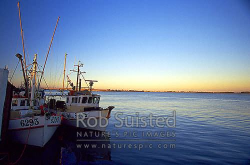 Fishing vessels moored in Tauranga Harbour, Tauranga, Tauranga District, Bay of Plenty Region, New Zealand (NZ) stock photo.