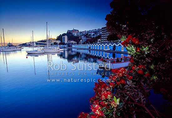 Oriental Bay and Port Nicholson boat sheds, yachts, and marina with Saint St Gerard's Monastery above. Pohutukawa flowering, Wellington, Wellington City District, Wellington Region, New Zealand (NZ) stock photo.