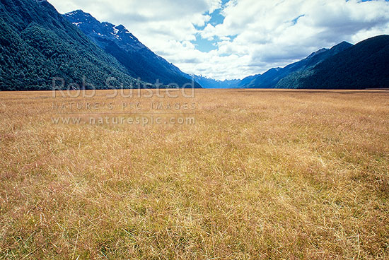 West branch of Eglinton Valley with mountains beyond in Fiordland National Park, Fiordland National Park, Southland District, Southland Region, New Zealand (NZ) stock photo.