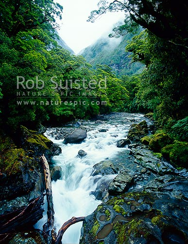 The Cleddau River running through Beech Forest (Nothofagus sp). Water sculptured rocks in foreground, Fiordland National Park, Southland District, Southland Region, New Zealand (NZ) stock photo.