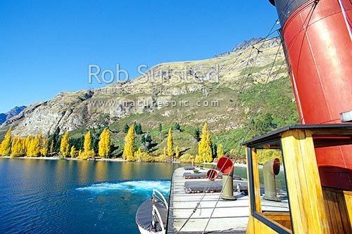 TSS Earnslaw - historic steamship on Lake Wakatipu, returning to Queenstown from Walter Peak Station since 1912. Autumn coloured trees, Queenstown, Queenstown Lakes District, Otago Region, New Zealand (NZ) stock photo.