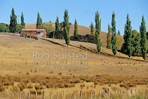 Old shearing shed on farmland, Martinborough, South Wairarapa District, Wellington Region, New Zealand (NZ) stock photo.