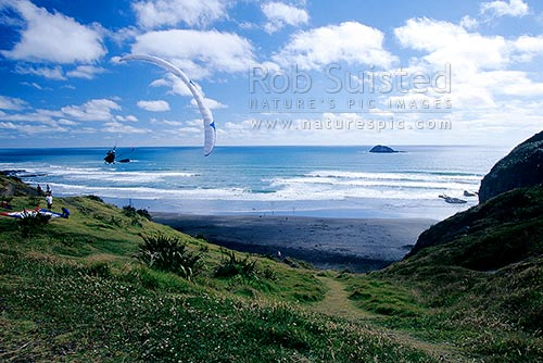 Parapenting or paragliding at Muriwai Beach, Muriwai, Auckland, Rodney District, Auckland Region, New Zealand (NZ) stock photo.
