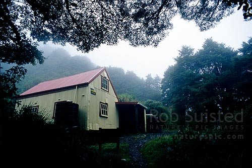 Historic Field Hut (built 1924) on the bushline on Mount (Mt) Hector and Southern Crossing track, Tararua Forest Park, Kapiti Coast District, Wellington Region, New Zealand (NZ) stock photo.