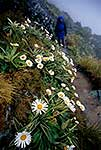Routeburn track in flower