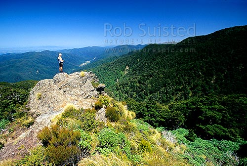Climbing the Mount (Mt) Holdsworth / Powell Hut tramping track. Tramper looking out over Totara Flats and Waiohine River behind, Tararua Forest Park, Masterton District, Wellington Region, New Zealand (NZ) stock photo.