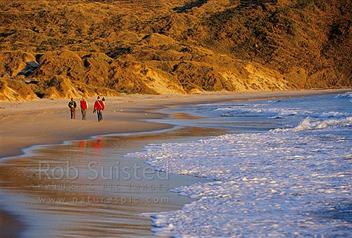 A group of people or tourists walking on Sandfly Bay beach in the evening light, Otago Peninsula, Dunedin City District, Otago Region, New Zealand (NZ) stock photo.