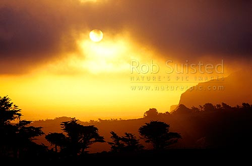 Sunset through stormy moody clouds and mist. Macrocarpa tree silhouettes, Otago Peninsula, Dunedin City District, Otago Region, New Zealand (NZ) stock photo.