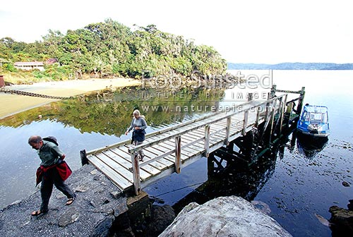 People and visitors arriving on Ulva Island by water taxi for guided tour. Post Office cove and wharf, Ulva Island, Stewart Island, Stewart Island District, Southland Region, New Zealand (NZ) stock photo.