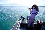 Hector's dolphin research