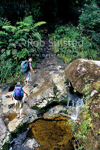 Walkers crossing Webb Creek and climbing the old historic pack horse steps en route to the Pinnacles Hut, Kauaeranga Valley, Thames-Coromandel District, Waikato Region, New Zealand (NZ) stock photo.