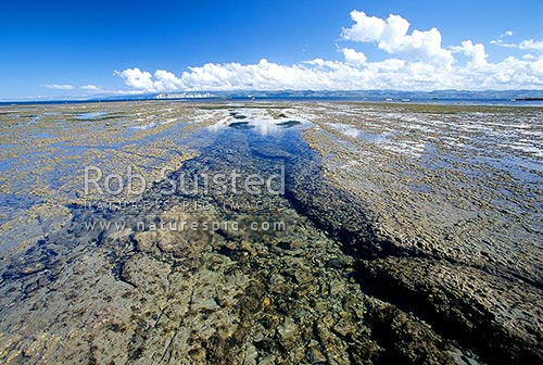 Looking across a tidal rock platform and Poverty Bay to Young Nick's Head from Gisborne, Gisborne, Gisborne District, Gisborne Region, New Zealand (NZ) stock photo.