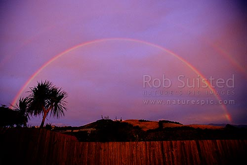 Double rainbows over farmland and cabbage tree (Cordyline australis), Wellington, New Zealand (NZ) stock photo.